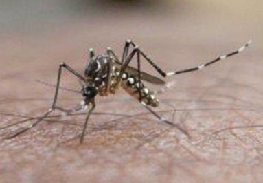 Dengue fever images