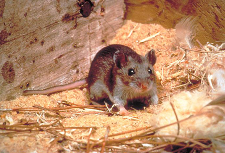 Hantavirus cardiopulmonary syndrome images
